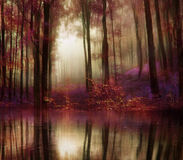 Fantasy autumn forest Stock Photo