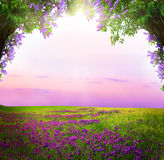 Fantasy background . Magic forest. Beautiful spring landscape.Lilac trees in blossom stock image
