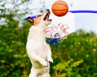 Fantasy basketball one-on-one game at backyard court Stock Images