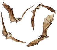 Fantasy bats 2 Royalty Free Stock Images