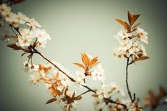 Fantasy blossom Stock Photos