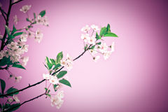 Fantasy blossom Royalty Free Stock Photography