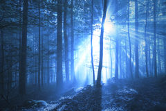Fantasy blue colored foggy forest with sunbeams Stock Photography