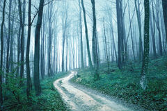 Fantasy blue green foggy forest road Royalty Free Stock Images