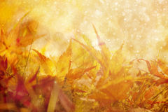 Fantasy blurred golden color autumn leaves in the rain Royalty Free Stock Photography