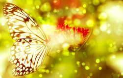 Fantasy butterfly on flower. Fantasy butterfly feeding on colorful plants and flowers stock image