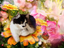Free Fantasy Cat On Flower With Butterfly Royalty Free Stock Photo - 67513445