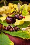 Fantasy chestnut animal figure Stock Photo