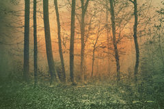 Fantasy color forest tree scene Royalty Free Stock Image
