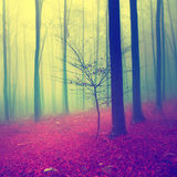 Fantasy color season forest Royalty Free Stock Images