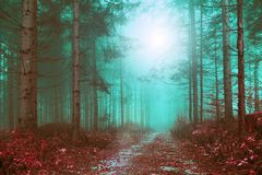 Fantasy colored foggy forest path. With mystic foggy light. Color filter effect used Stock Photo