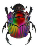 Fantasy colors on Oxysternon conspicillatum dung beetle Royalty Free Stock Photo