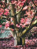 Fantasy composite scene of a tree in autumn and a small door stock images