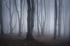 Fantasy dark forest with mysterious fog Stock Photo