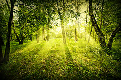 Fantasy deep forest. Fantasy green deep forest on summer morning Stock Photography