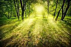 Fantasy deep forest. Fantasy green deep forest on summer morning royalty free stock photo