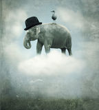 Fantasy elephant flying stock images
