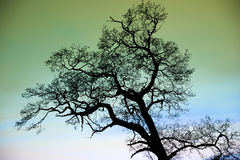 Fantasy enchanted tree silhouette against green sky Stock Photography
