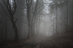 Fantasy fairytale forest with fog in autumn Royalty Free Stock Photo