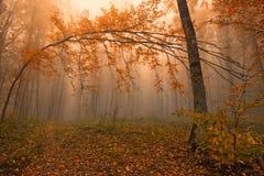 Fantasy fall landscape Royalty Free Stock Photography