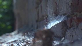 Fantasy, fate,  memory, forgotten, witchcraft other-worldly. An old spider web is a symbol of magic of antiquity and riddles of the past stock video