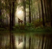 Fantasy fawn in a wild forest Stock Photo