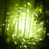 Fantasy firefly light in foggy forest Royalty Free Stock Images