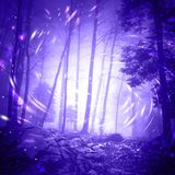 Fantasy firefly lights in dark foggy forest Royalty Free Stock Image