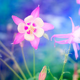 Fantasy flower background Stock Images