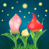 Fantasy flowers tulips Stock Photos