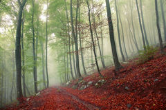 Fantasy foggy forest Royalty Free Stock Image