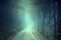 Fantasy foggy forest road Stock Photo