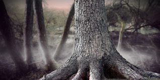 Fantasy forest Stock Photography