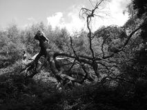 Fantasy forest. A black and white photo of a fallen tree Stock Photo