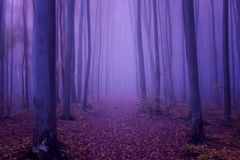 Fantasy forest abstract background, ultra violet concept - color of the year 2018. Magic forest, autumn landscape, ultra violet concept - color of the year 2018 Royalty Free Stock Photos