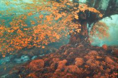 Fantasy forest in autumn. With a stream stock images