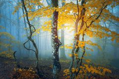 Fantasy forest in autumn. With yellow leaves royalty free stock photos