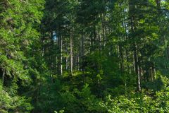 Fantasy forest background, wild environment.  stock photography
