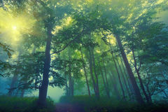 Fantasy forest. Beautiful view of mysterious fantasy forest Stock Photos