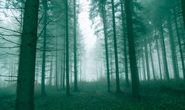 Fantasy forest with fog in Green Stock Image