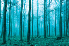 Fantasy forest in fog in Green Stock Photography