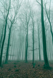 Fantasy Forest in the fog in Green Royalty Free Stock Photos