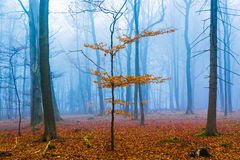 Fantasy forest with fog and orange foliage Royalty Free Stock Images