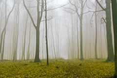 Fantasy forest with fog and yellow foliage Royalty Free Stock Images