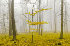 Fantasy forest with fog and yellow leaves Royalty Free Stock Images