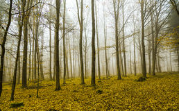 Fantasy forest with fog and yellow leaves Stock Photo