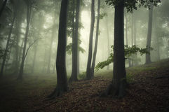 Fantasy forest with green fog Stock Photography