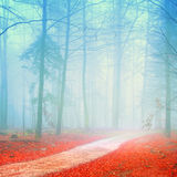 Fantasy forest Stock Image