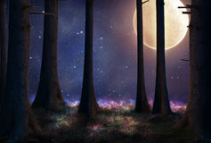 Fantasy forest at night Stock Images