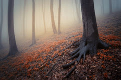 Fantasy forest with red leaves and mysterious fog Royalty Free Stock Images